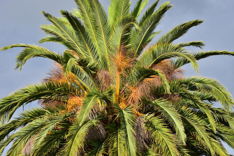 Dessus de palmier photos libres de droits