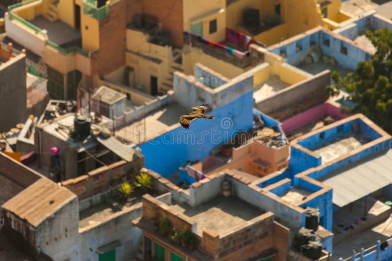 Dessus de toit de la ville bleue de Jodhpur photographie stock libre de droits