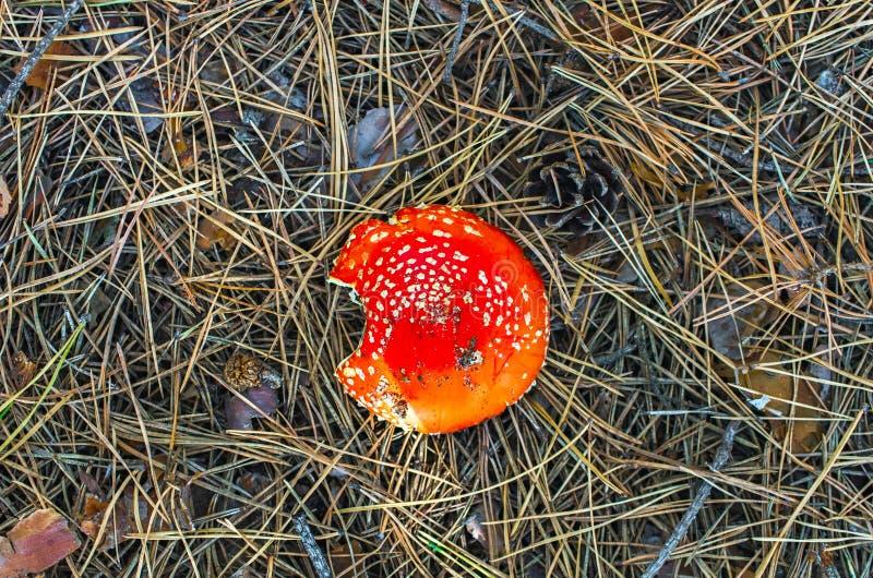 Dessus mordu de champignon de chapeau images stock