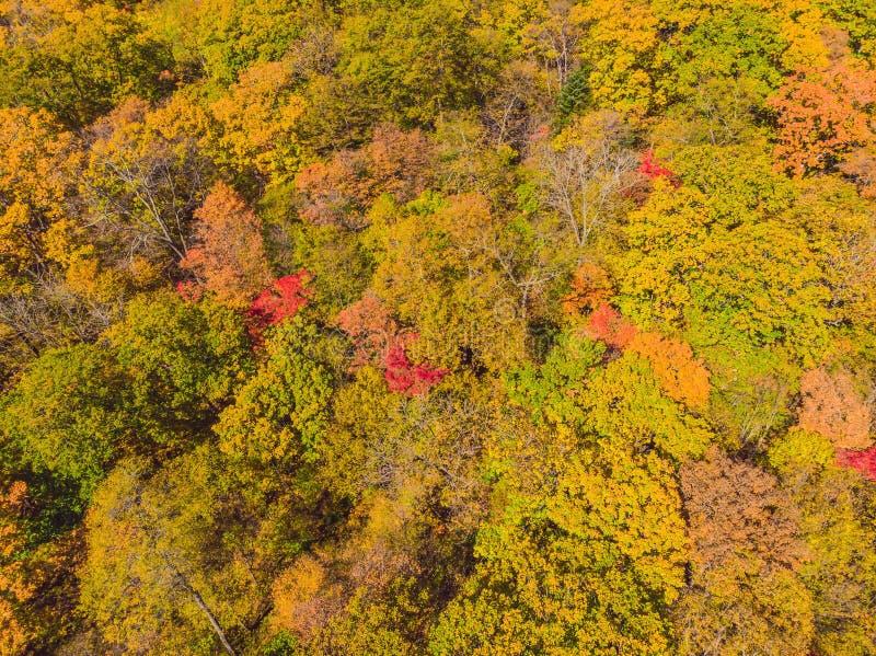 Dessus a?rien en bas de vue de for?t d'automne avec les arbres verts et jaunes Belle chute m?lang?e de for?t ? feuilles caduques  photo libre de droits