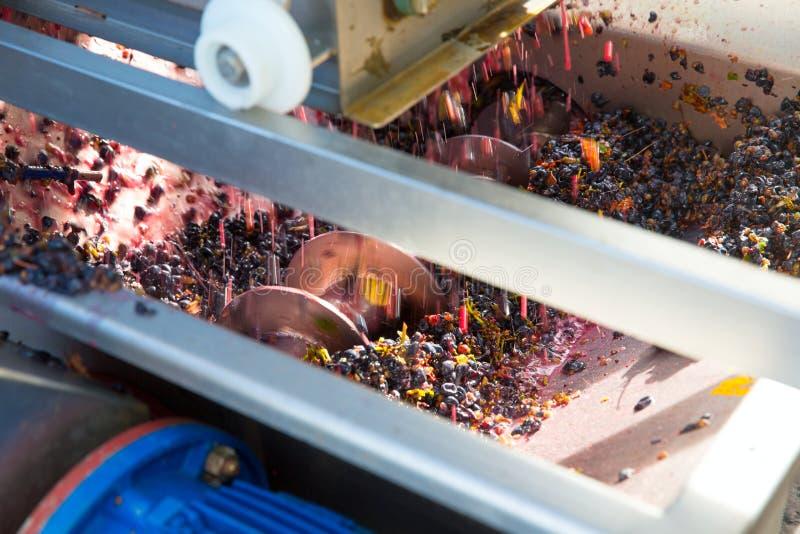 Destemmer de broyeur de tire-bouchon vinemaking avec des raisins images libres de droits