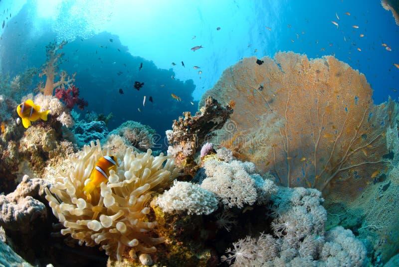 Destinación tropical del undferwater escénica fotografía de archivo