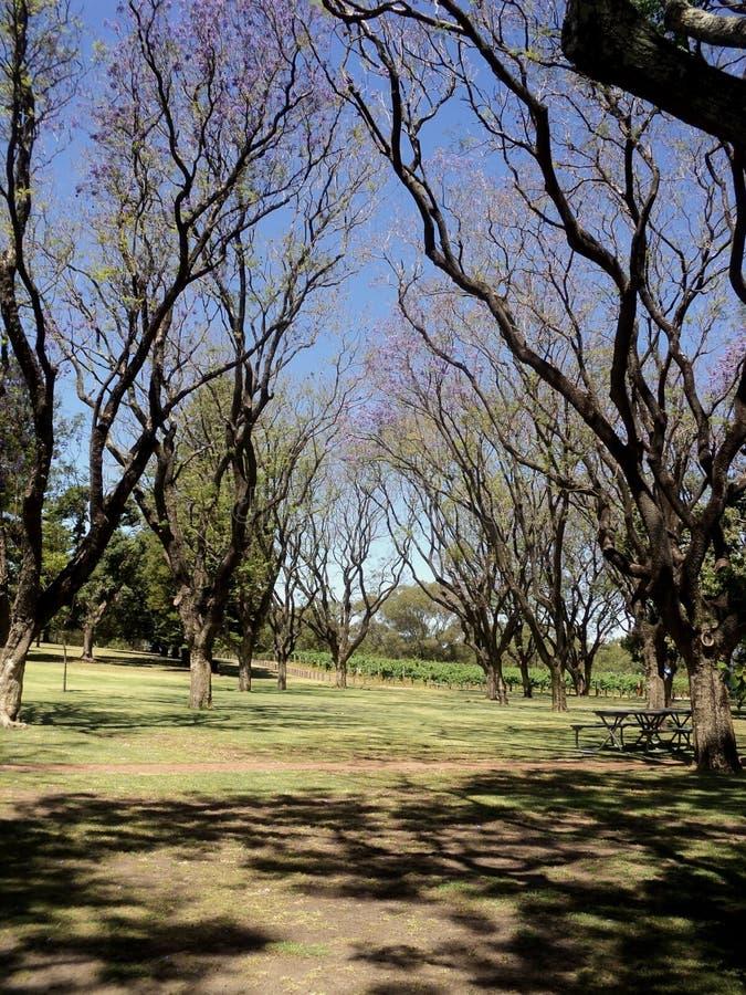 Destinazione turistica i re Park e giardino botanico, Perth Australia della riva del fiume immagini stock