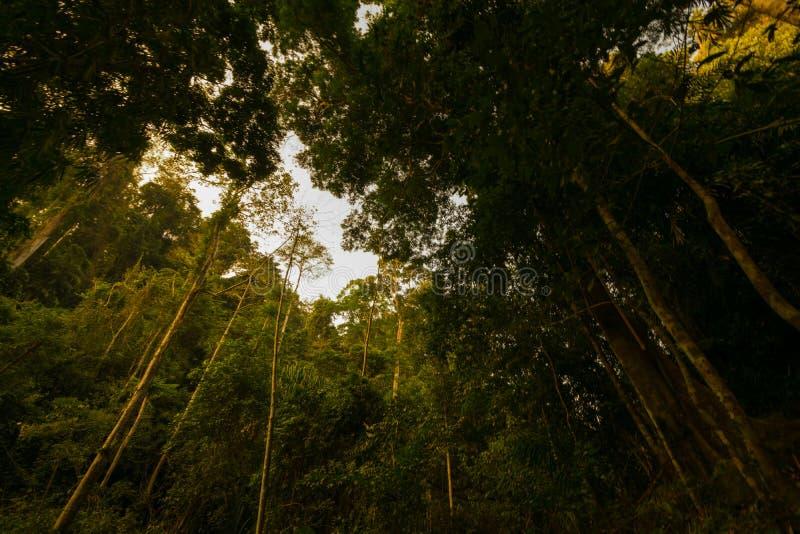 Destinos Rio Celeste do curso de Costa Rica Nature Background Travel Destinations Rio CelesteCosta Rica Nature Background imagem de stock royalty free