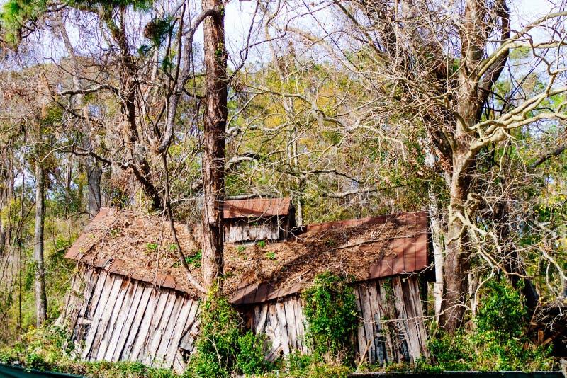 Destroyed abandonou a estrutura de madeira profundamente dentro de uma floresta imagens de stock