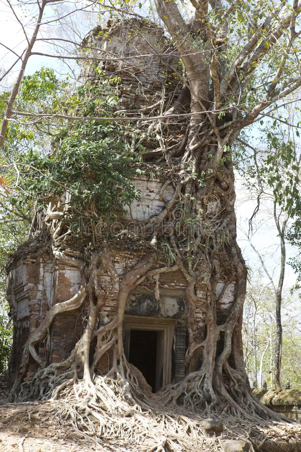 Destroyed covered with roots of trees temple Prasat Chrap in the Koh Ker temple complex, Siem Reap, Cambodia royalty free stock images