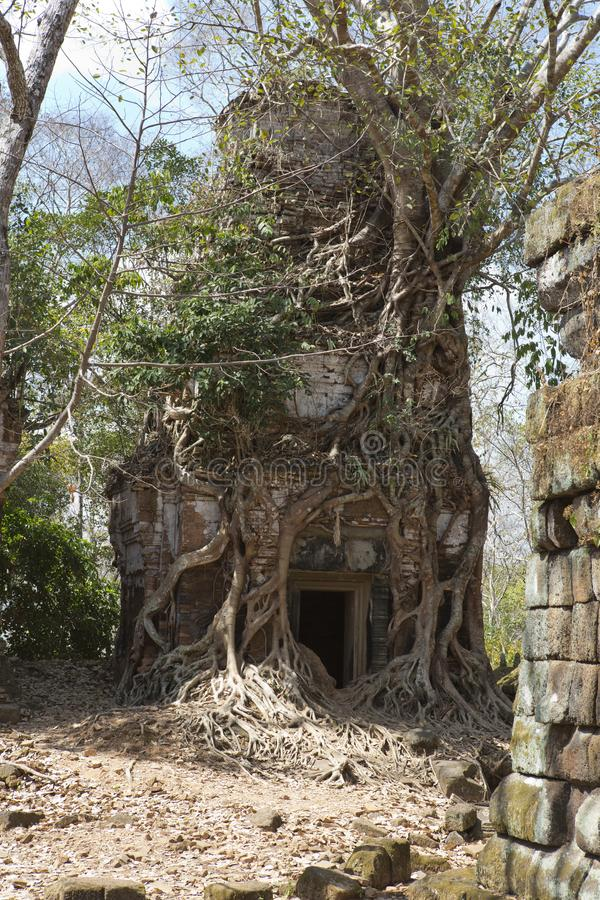 Destroyed covered with roots of trees temple Prasat Chrap in the Koh Ker temple complex, Siem Reap, Cambodia stock photo