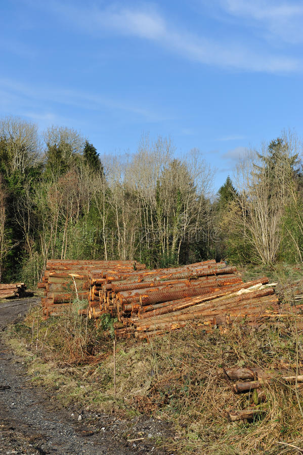 Download Destroyed forest stock photo. Image of exploitation, devastation - 18392118