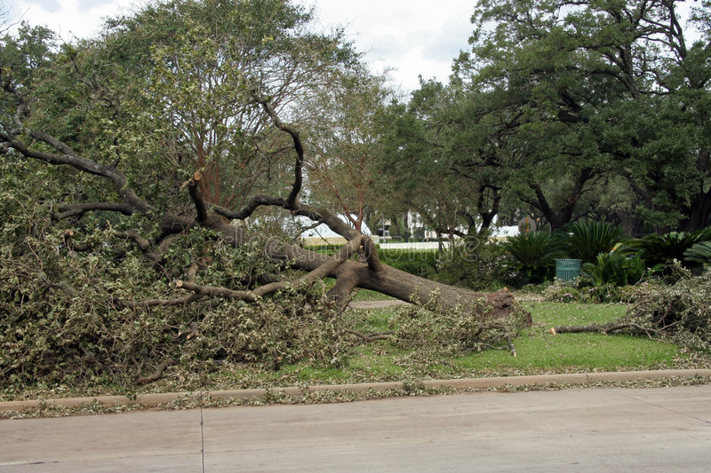 Download Destroyed Tree stock image. Image of catastrophe, aftermath - 6428407