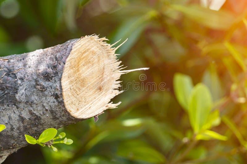 Destrua a selva, logs extraídos de uma floresta sustentável sob s imagem de stock royalty free