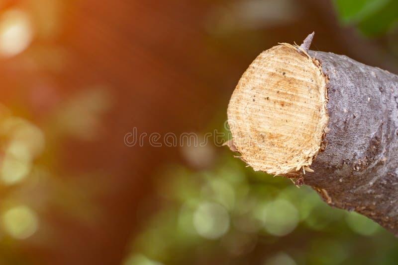 Destrua a selva, logs extraídos de uma floresta sustentável sob s fotografia de stock