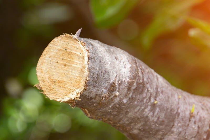 Destrua a selva, logs extraídos de uma floresta sustentável sob s fotografia de stock royalty free