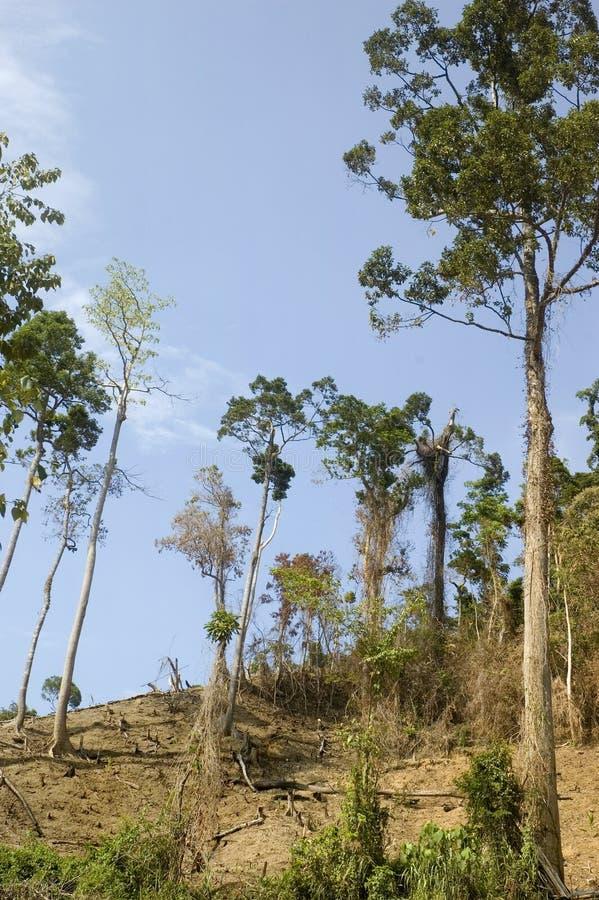 Destrucción del bosque fotos de archivo