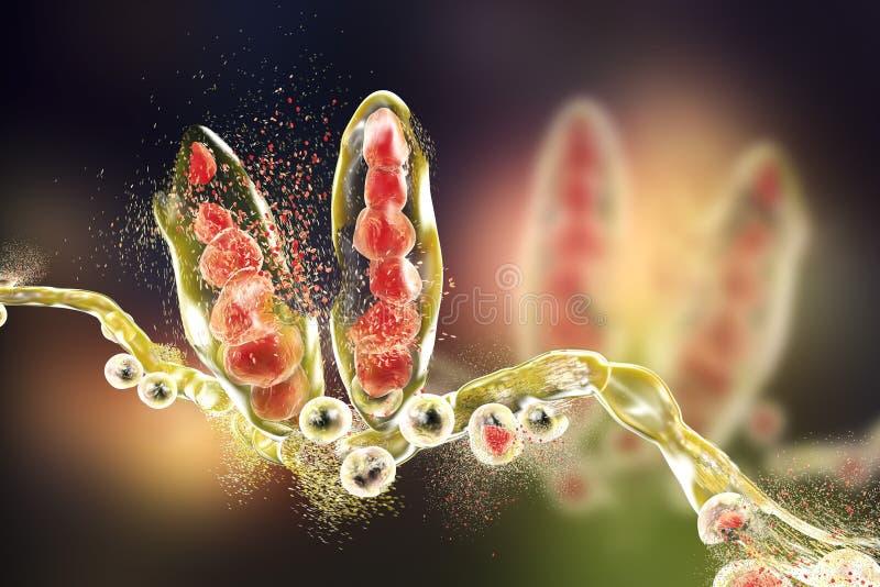 Destrucción del hongo del Trichophyton ilustración del vector