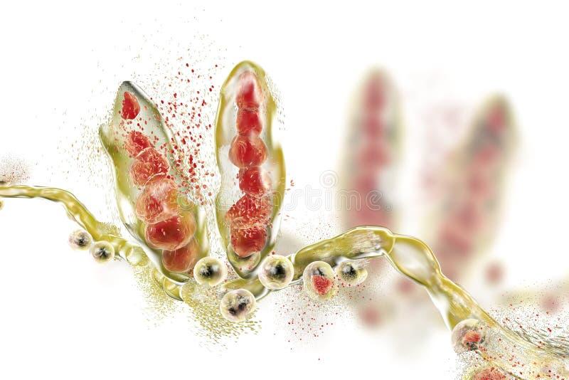 Destrucción del hongo del Trichophyton stock de ilustración