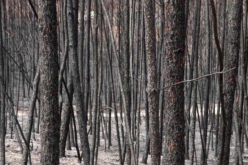 Download Destruction stock image. Image of forest, burn, destruction - 26640491
