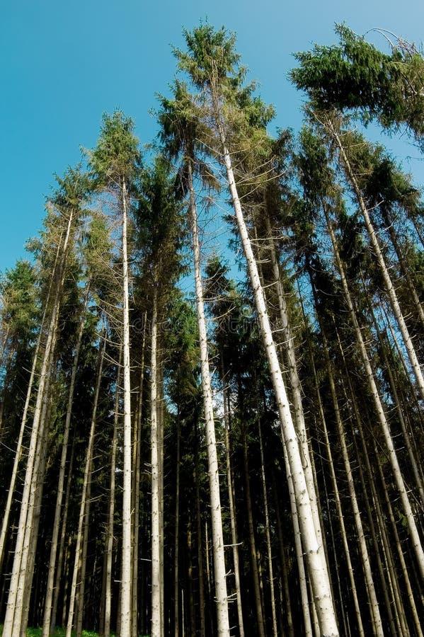 Destruição da floresta foto de stock