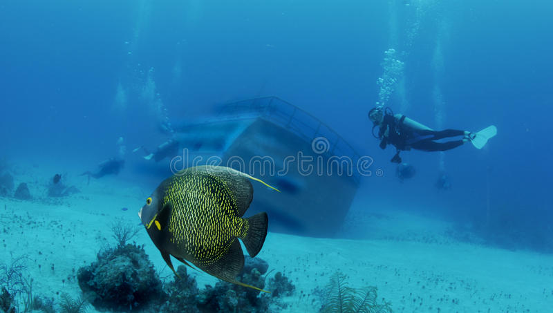 Destruição e peixes foto de stock royalty free