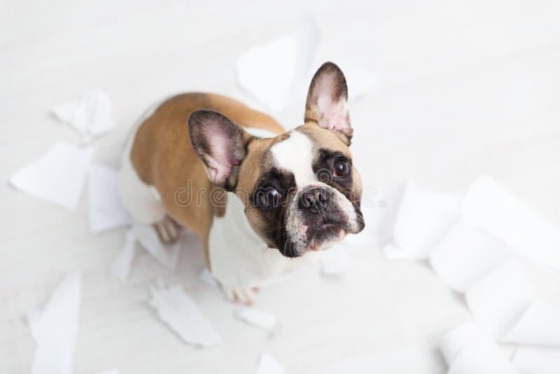 Destruição home do animal de estimação no assoalho branco do banheiro com alguma parte de papel higiênico Foto abstrata dos cuida foto de stock royalty free