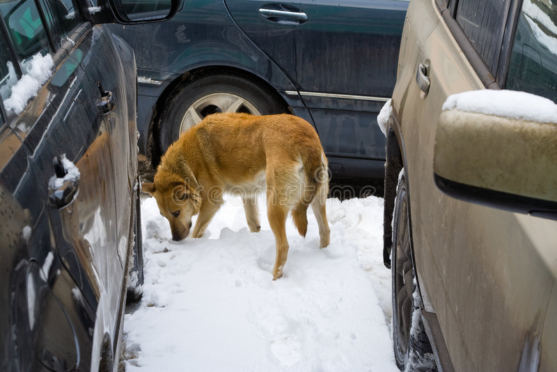 Desvío del perro de los coches fotografía de archivo