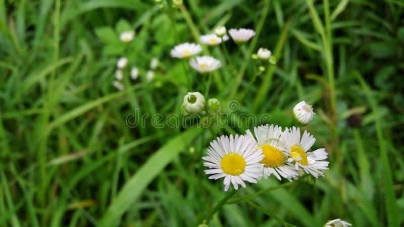 Deszczów kwiaty zdjęcia stock