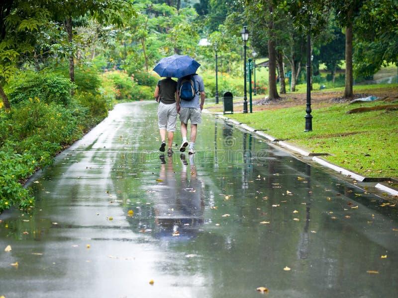 deszcz, zdjęcie royalty free