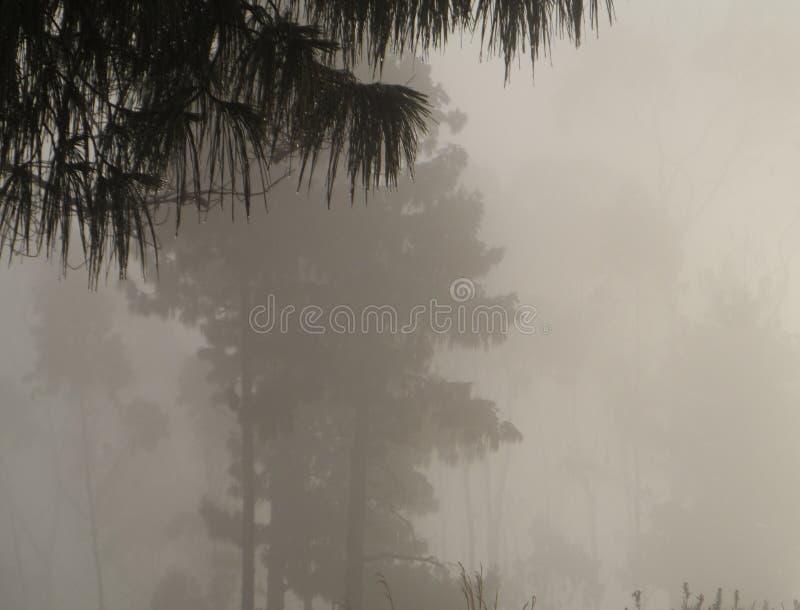 Deszcz i mgła zdjęcia royalty free