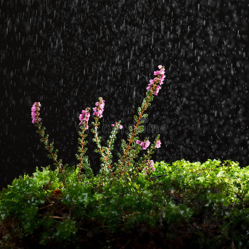 Deszcz i molwa zdjęcia royalty free