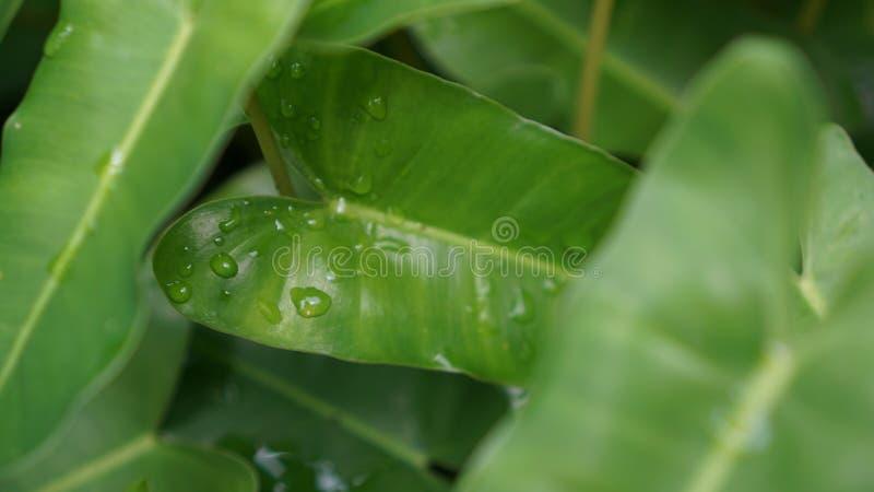 Deszcz krople na liściu obraz stock
