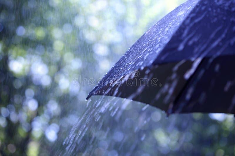 Deszcz na parasolu fotografia stock