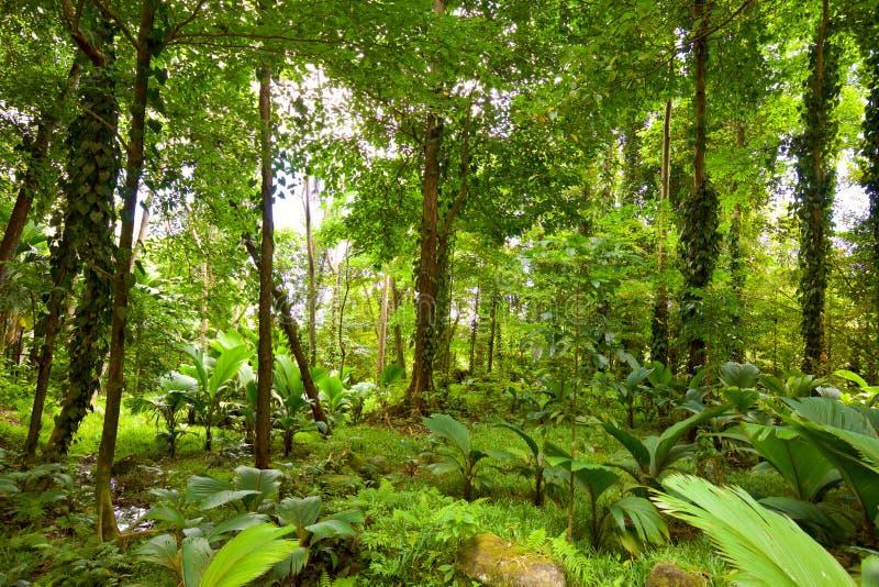 deszcz tropikalnych lasów, zdjęcie stock