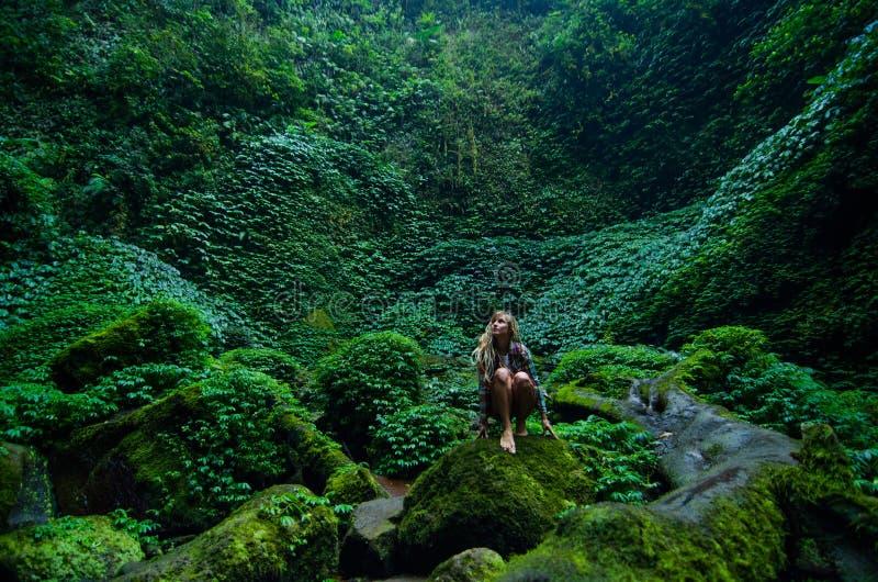 deszcz tropikalnych lasów, obraz stock