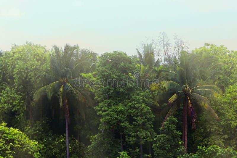 deszcz tropikalnych lasów, obrazy stock