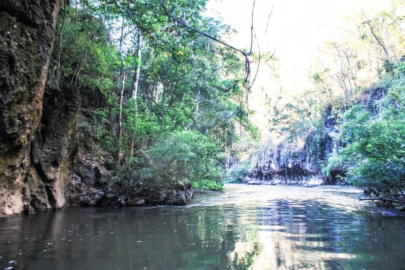 deszcz tropikalnych las?w, zdjęcia royalty free