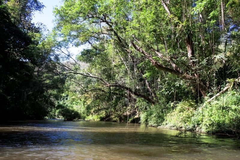deszcz tropikalnych las?w, fotografia stock