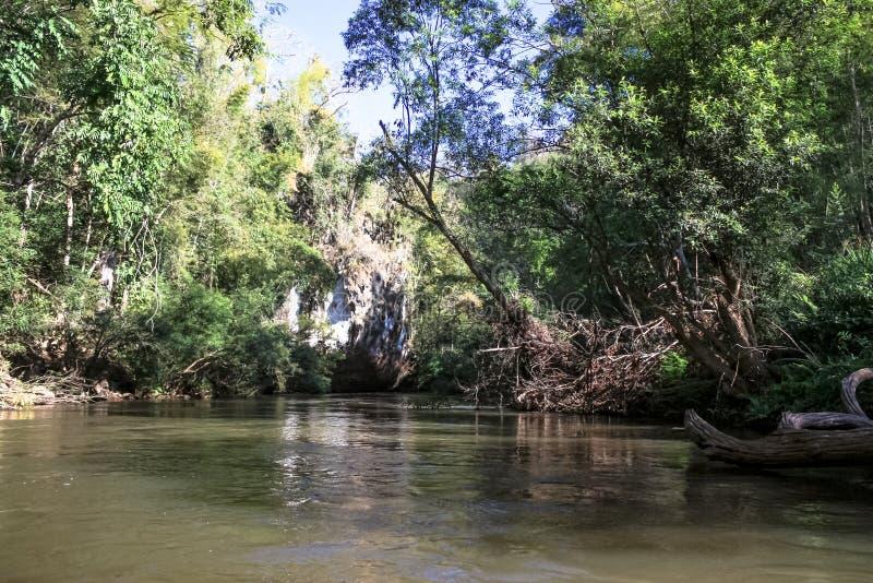 deszcz tropikalnych las?w, obraz royalty free
