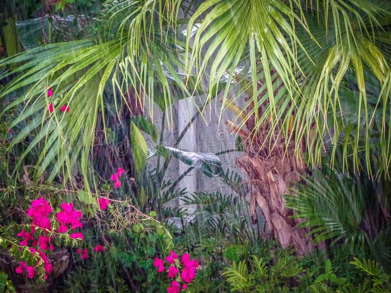 Deszcz w dżungli obrazy royalty free