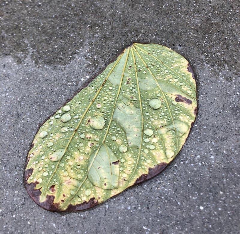 Deszcz zakrywający liść fotografia royalty free