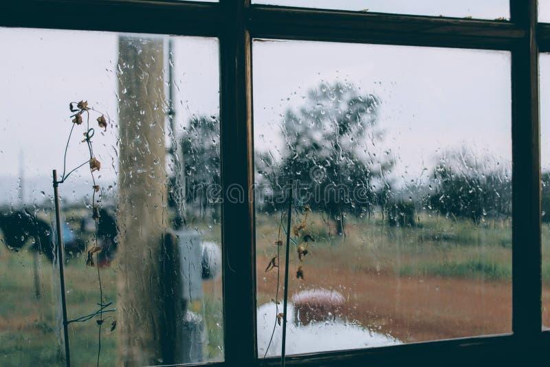 Deszczowego Dnia nadokiennego kwiatu chmurny salowy obraz royalty free