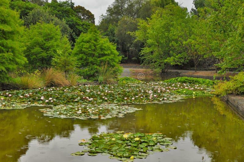 Deszczowy dzień w Parkowym Wilson Australia zdjęcia royalty free