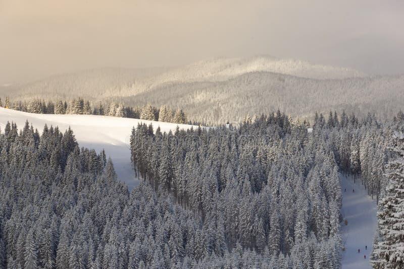 Detäckte lutningarna av de Carpathians bergen som täckas med barrskogar och skidåkare som åker skridskor på en frostig solig vint royaltyfria bilder
