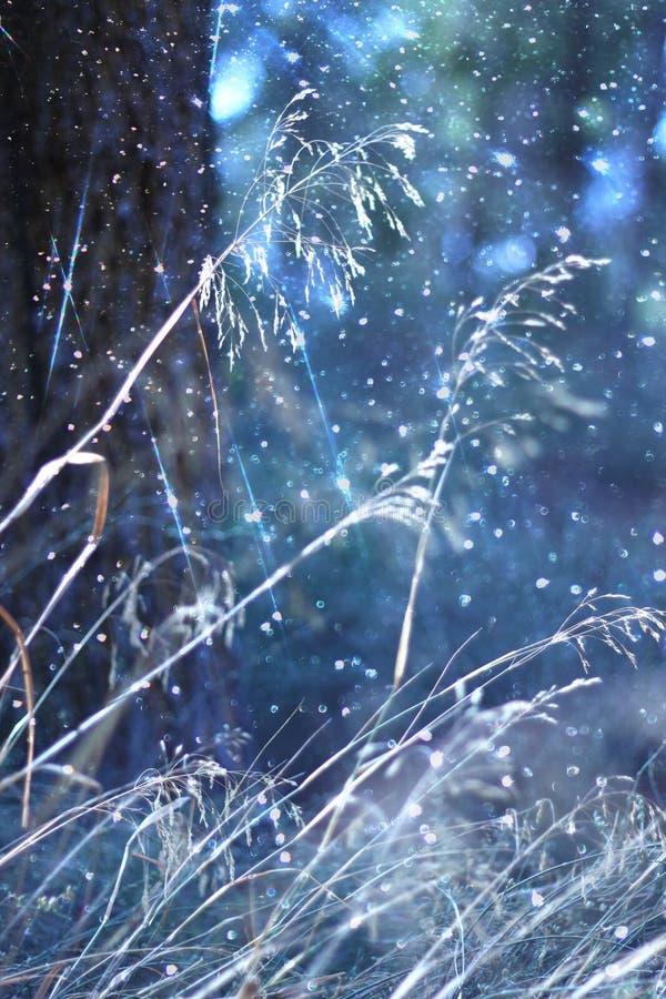Det abstrakta fotoet av ljusbristningen bland träd och blänker bokehljus bilden är suddig och filtrerad royaltyfri bild