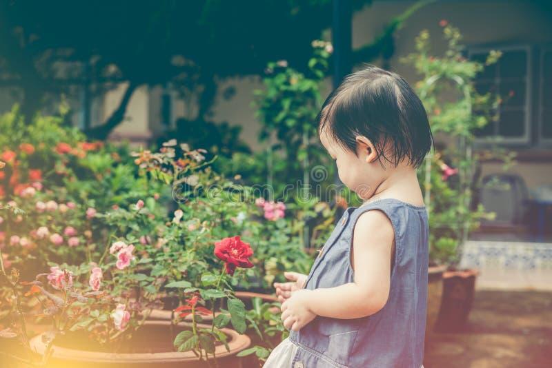 Det asiatiska barnet som beundrar för, steg blommor och naturen omkring på backy royaltyfri fotografi