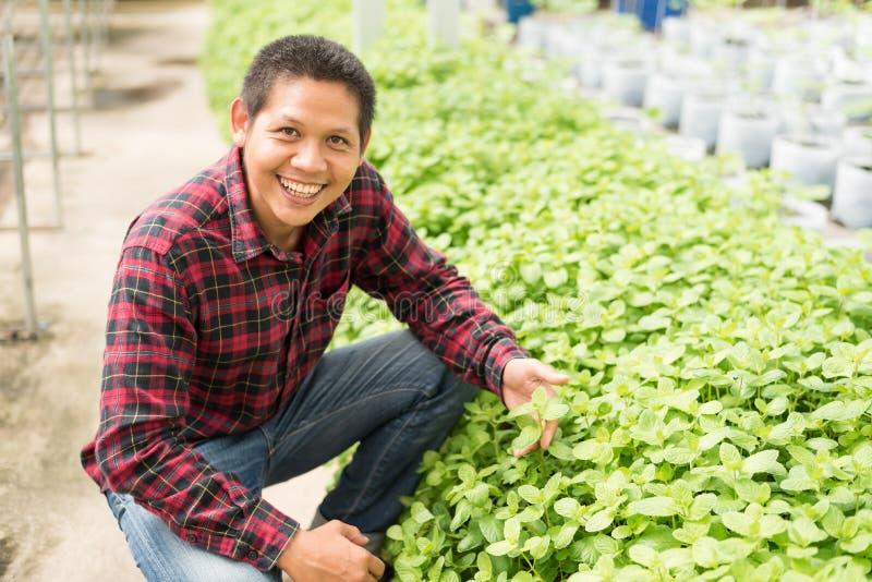 Det asiatiska bladet för bondeplockningmintkaramellen i grönsaker brukar arkivbild