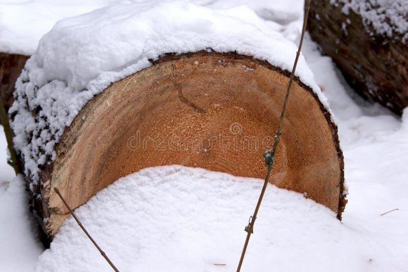 Det avverkade snittet sörjer träd i vinterskogen royaltyfri fotografi