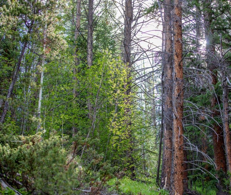 Det Beuaitulf gräsplanlandskapet med den glödande solen till och med sörjer träd royaltyfri foto