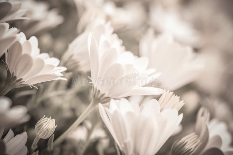 Stilla blom- bakgrund royaltyfria bilder