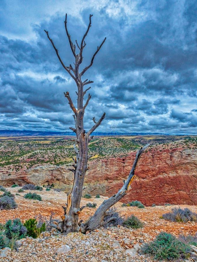 Det borttappade och ensamma trädet royaltyfria foton
