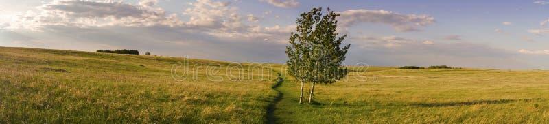 Det breda panorama- landskapet och den isolerade trädnäskullen parkerar präriegräs Alberta Foothills arkivbilder