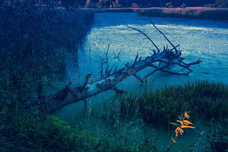 Det döda trädet ligger i sjön fotografering för bildbyråer